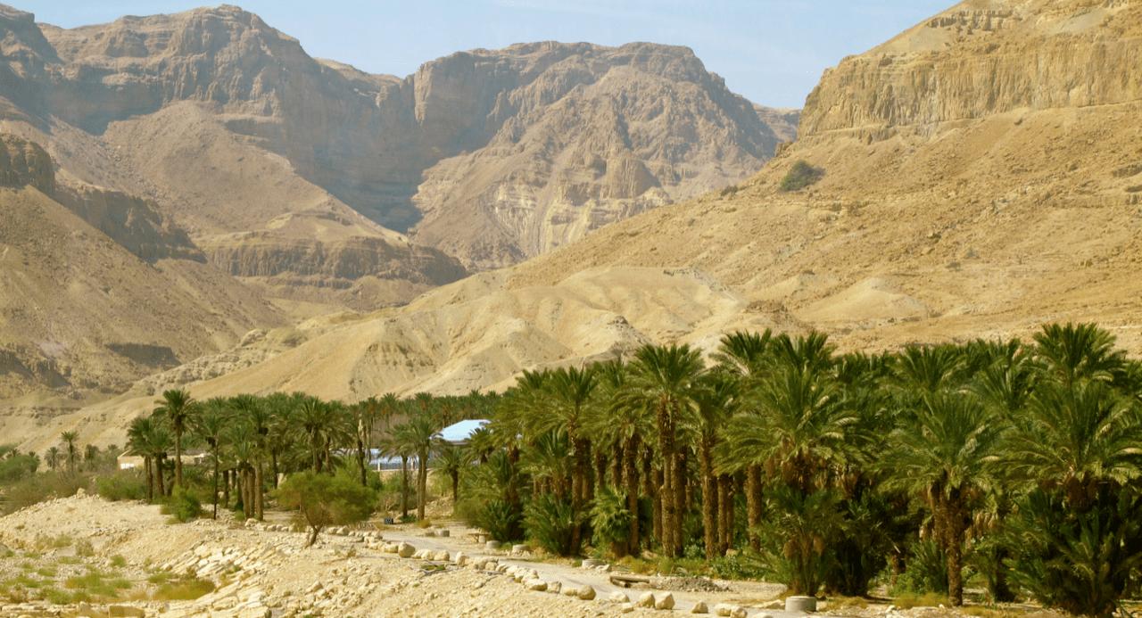 oasis in the desert-min