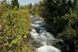 riverDan-min
